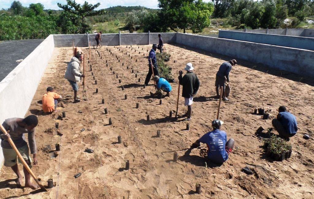 plantation des lits d'humification, 2016